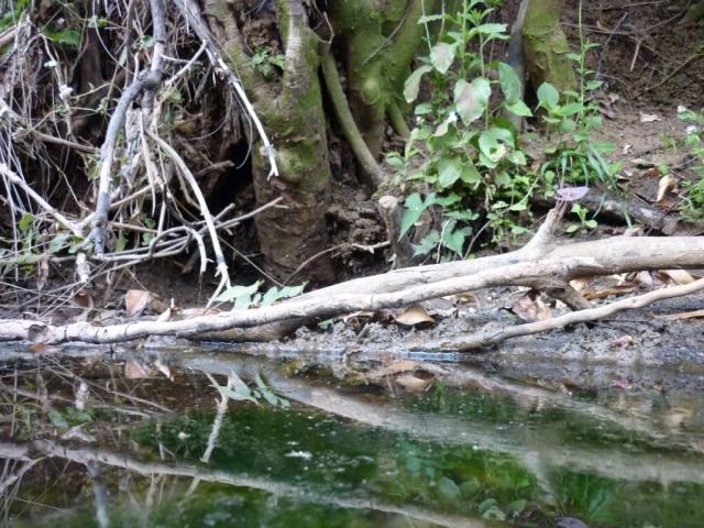 Reflejo lejano de una rama. Foto: Javier Montenegro.