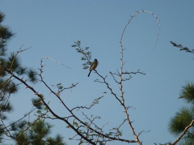 Ave en la punta de una rama. Foto: Javier Montenegro